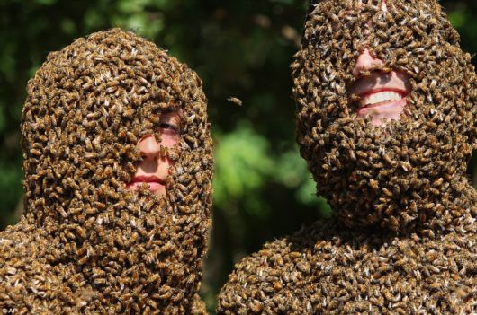 Crazy Beards Of Bees Competition