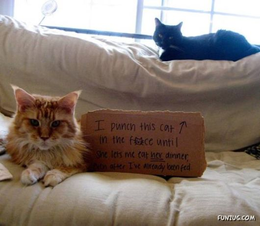 When Cats Confess For Disgraceful Acts