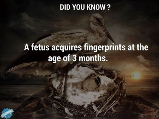 Amazing Facts About Babies In The Womb