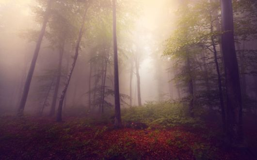A Guy Captured Stories Of The Forests Inspired By My Grandmothers Tales