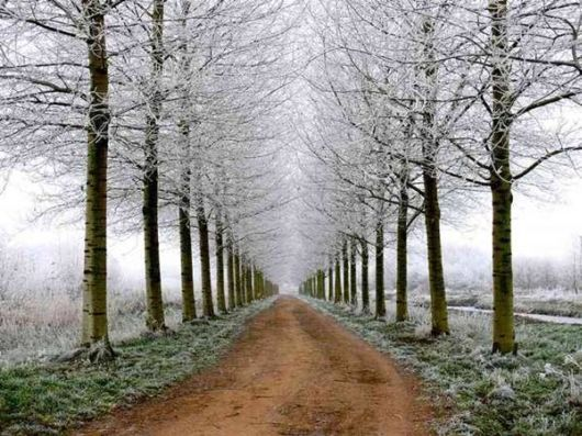 Beautiful Fairy Tale Forest Pictures
