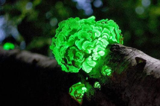 Most Fascinating Looking Fungi