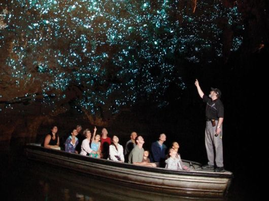 Glowworms Create Spectacular Starry Night Sky in a New Zealand Cave