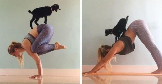 Yoga Girl And Her Goat Are Most Adorable Partners
