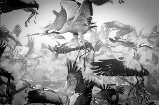 Breathtaking Pictures Of Animals Migrating