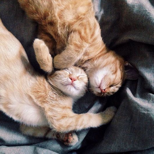 Two Pretty Ginger Kittens Found In Garden Become Inseparable Brothers