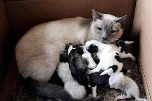 Mothers Love For Foster Babies