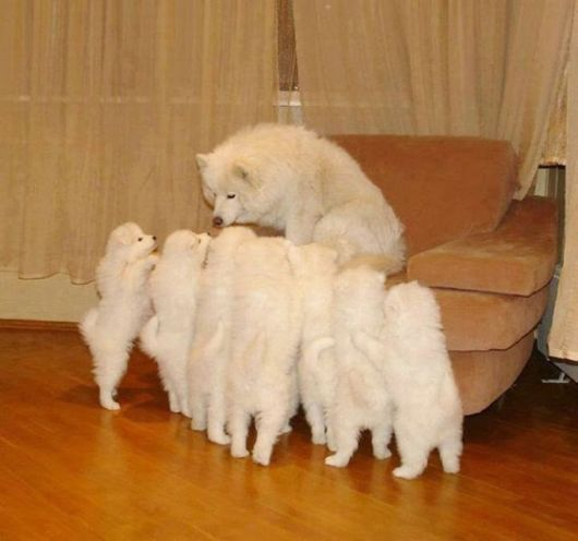 Newborn Puppies And Their Proud Parents