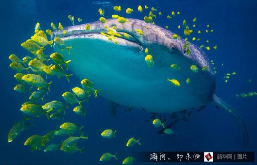 Sharks Can Be Smart Fish Predators
