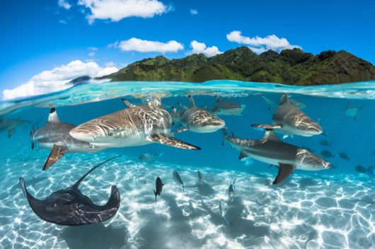2016 Underwater Photographer Of The Year Highlights
